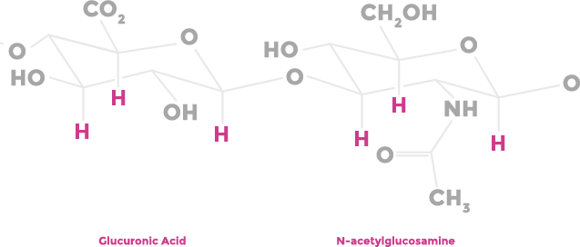 Figure of Glucuronic Acid and N-acetylglucosamine moules